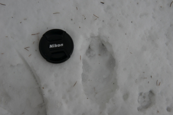Carnivore activity - guess who...