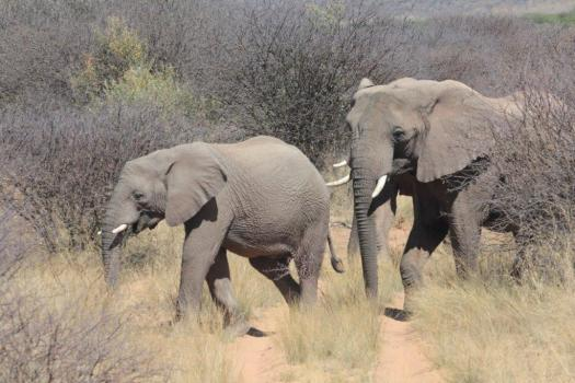 elephan 2012 (2)