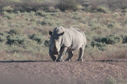 rhino 2012 (1)