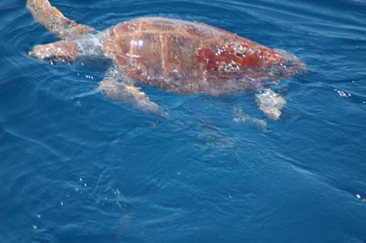 turtle 2010 (1)