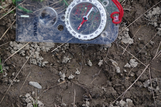 Snow leopard track (c) Peter Sporrer