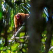wildlife 2015 (2)