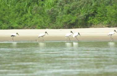 19May-storks1