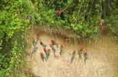 29May-macaws1