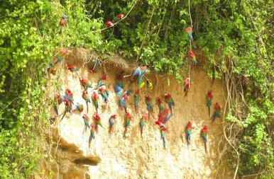 29May-macaws5