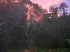 forest light2
