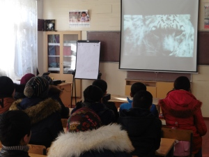 Watching a the snow leopard documentary