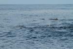 Multiple sperm whales (taken by Craig Turner)