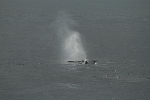Following a sperm whale