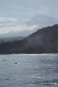 False killer whales and Pico (c) Criaig Turner