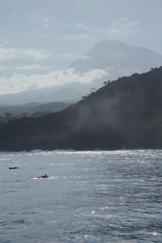 False killer whales and Pico (c) Craig Turner