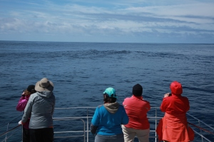 Following sperm whales (taken by Craig Turner)