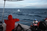 Tracking a Fin whale (taken by Craig Turner)