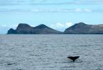 Spermwhale fluke