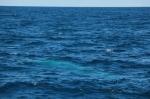 Spot the blue whale