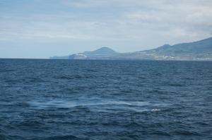 Whale 'footprint'