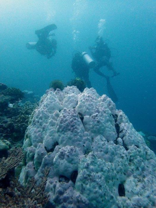 Survey divers with bleaching
