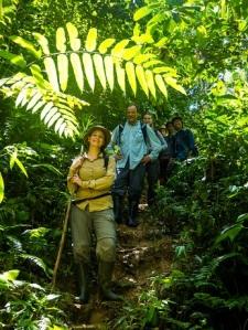 Jungle surveying