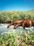 Pferde in den Ala-Too-Bergen, am Weg ins Basislager