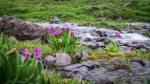Blumenpracht und Wasser allerorten in den Hochtälern des Ala-Too