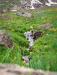 Blumenwiese wie in einem Garten auf 3700m Höhe
