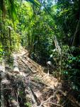 illigal-logging-inside-the-rimbang-bailing-reserve