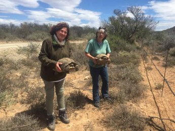 Two tortoises rescued