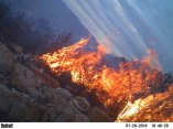Bush fire caught on camera trap