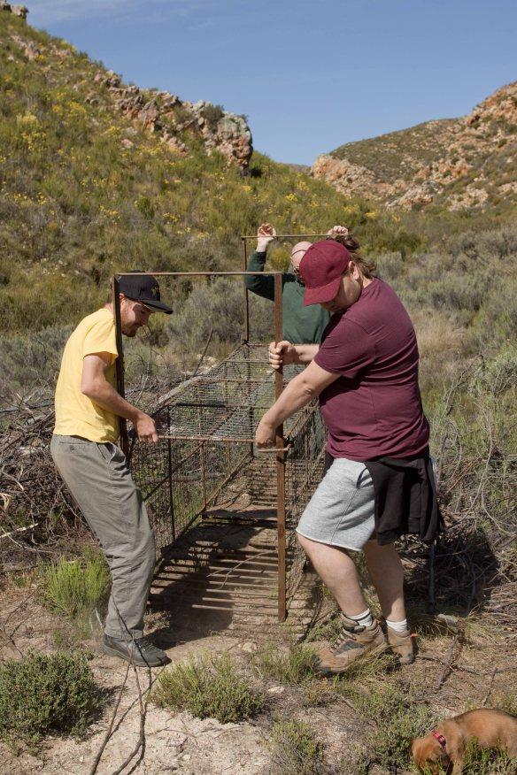 leopard-trap-relocation