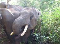 elephants-2016-1