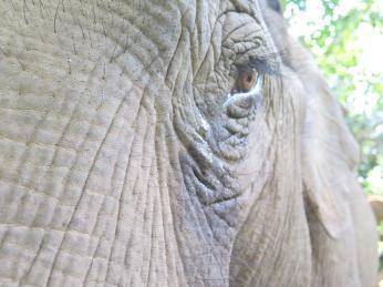 elephants-2016-10