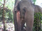 elephants-2016-11