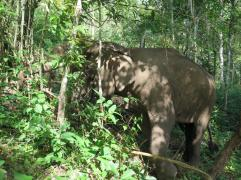 elephants-2016-12