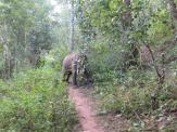 elephants-2016-16