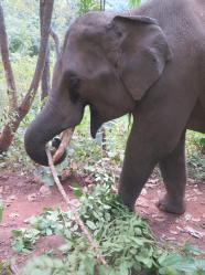 elephants-2016-17