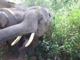 elephants-2016-2