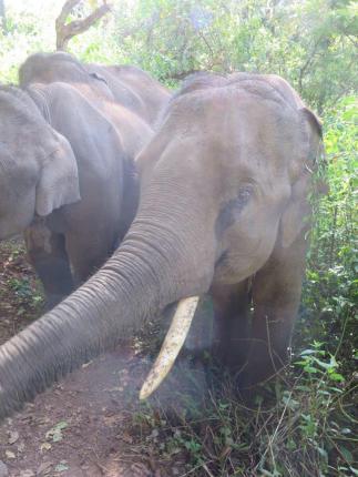 elephants-2016-3