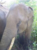 elephants-2016-5