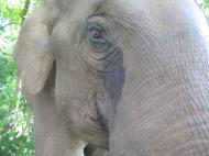 elephants-2016-8