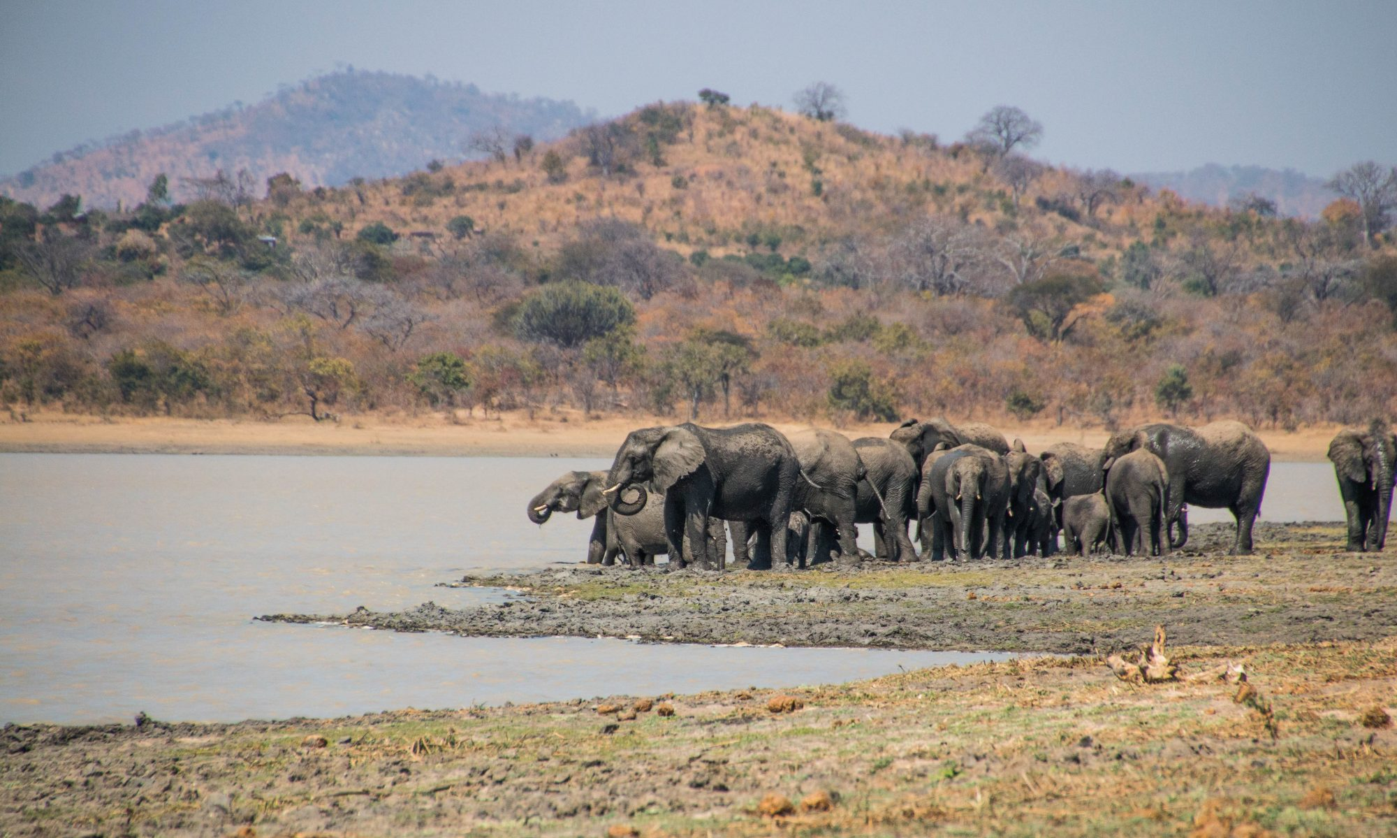 Biosphere Expeditions: blogs from the wildlife conservation frontline
